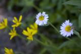 rr0808mtrain101flowers.jpg