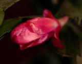 flower_0012.jpg