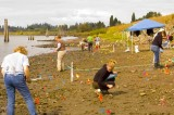 Sauvie Island Archaelogical Dig   - 2007