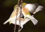 Bunch o Birds