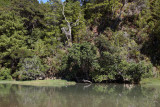 Kakamatua Stream 8730