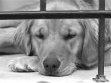 Bella - Napping.jpg