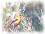 Bird In The Wild_Painting.jpg