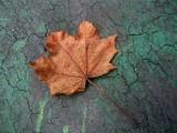 Leaf On The Walk
