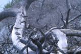Common Greenshank 0126.jpg