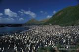 King Penguin s0107.jpg