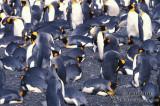 King Penguin s0202.jpg