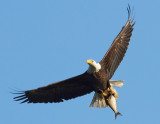 Eagles of Maryland 2009