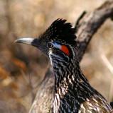 AZ. Bird's& Critter's 2009