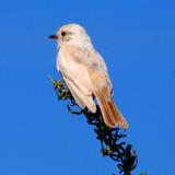AZ. Birds & Critter's 2010