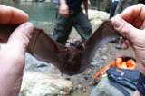 Bat V