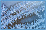 FrostFerns on glass