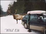 Pa Elk