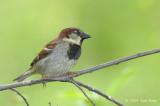 Sparrow, House @ Central Park, NY