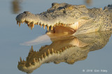 Saltwater Crocodile @ Yellow Water, Australia