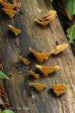 Fungi on Tree @ Fraser's Hill