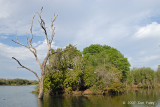 Village Weaver Nests at Lake Panic