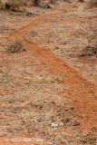 Hippopotamus Trail