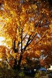 Late Fall in Merrick