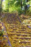 Leafy stairway in Crocheron Park, Queens