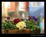 Flower Box, Portmeirion 2009