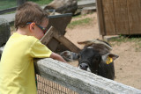 Sometimes You have to Feed a Goat  :*)