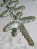Ohio Winter 2009