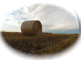Hay bales in the prairies
