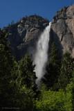 Windswept Yosemite Falls