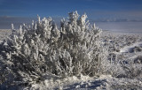 Freezing Fog and Hoar Frost