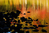 Three R's... Reeds, Rocks and Reflections