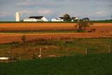 Acres of Golden Crop