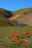 Nature's Pallette