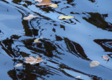 Leaves and reflections make interesting patterns in the water