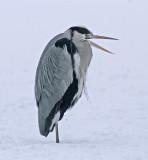 Cranes, storks, cormorants and herons