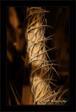 Twisted Stalk