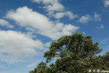 Trees and clouds, Achilles Point