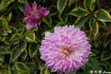 Flowers (DSC_5440)