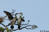 Birds (DSC_6278)