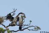 Birds (DSC_6277)