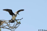 Bird ( DSC_6232)