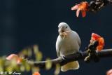 White Cockatoo 02