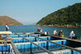Lo Fu Wat, Tolo Harbour