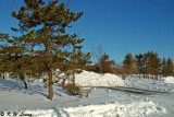 Snow Scene 07