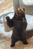 Shawa-Shinzan Bear Ranck 01