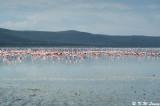 Lake Nakuru 02