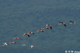 Flamingos (DSC_7974)
