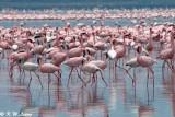 Flamingos (DSC_7975)