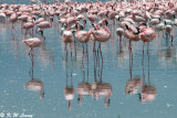 Flamingos (DSC_8031)