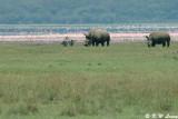 Lake Nakuru 04